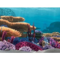 Painel penn plax coral reef 10 gal backgr 50x30cm